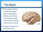 the brain2