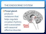 the endocrine system1