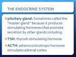the endocrine system2
