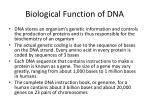 biological function of dna