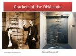 crackers of the dna code