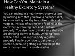 how can you maintain a healthy excretory system
