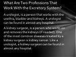what are two professions that work with the excretory system