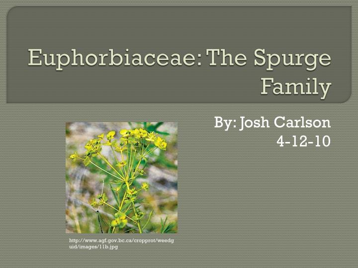 euphorbiaceae the spurge family n.