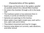 characteristics of the spiders