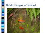 bracket fungus in trinidad