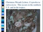 christmas wreath lichen cryptothecia rubrocincta this occurs in the southern u s and in the tropics