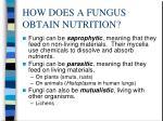 how does a fungus obtain nutrition