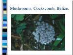 mushrooms cockscomb belize