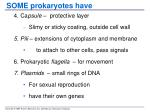 some prokaryotes have