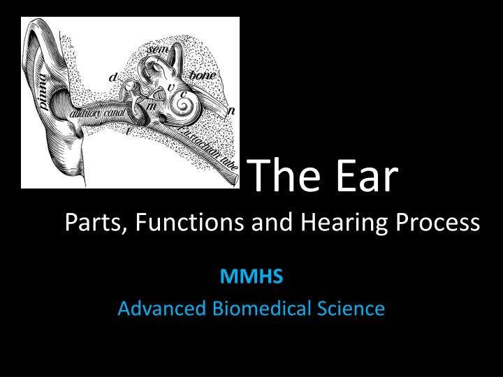 the ear parts functions and hearing process n.