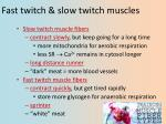 fast twitch slow twitch muscles
