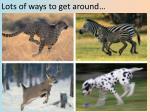 lots of ways to get around
