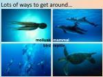 lots of ways to get around1