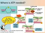 where is atp needed