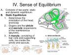 iv sense of equilibrium