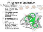 iv sense of equilibrium2