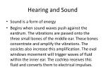 hearing and sound