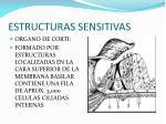 estructuras sensitivas
