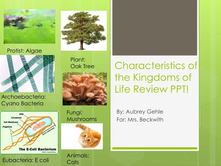 characteristics of the kingdoms of life review ppt n.