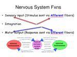 nervous system fxns