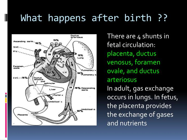 What happens after birth ??