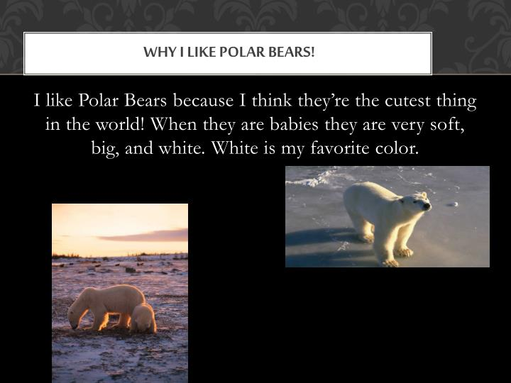 Why I Like Polar Bears!