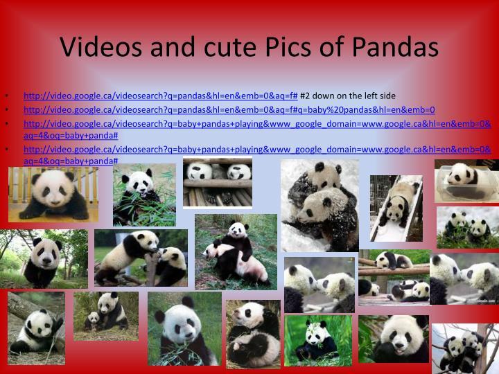 Videos and cute Pics of Pandas