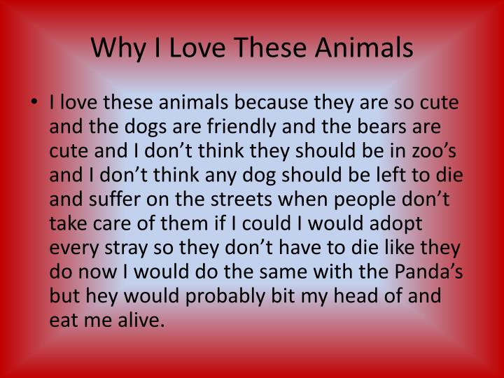 Why I Love These Animals