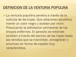 definicion de la venturia populina