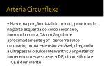 art ria circunflexa