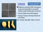 viroid