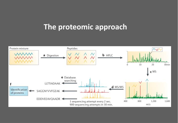 The proteomic approach