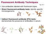 fluorescent antibody techniques