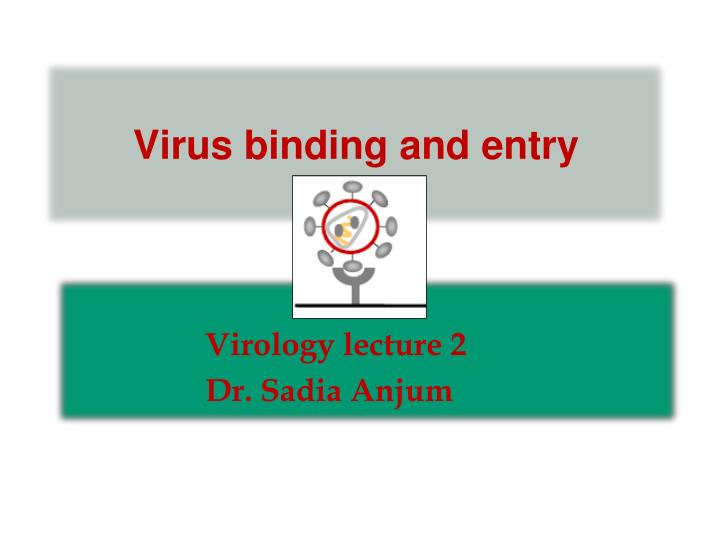 virus binding and entry n.