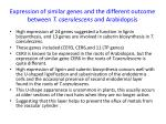 expression of similar genes and the different outcome between t caerulescens and arabidopsis