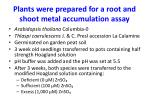 plants were prepared for a root and shoot metal accumulation assay