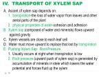 iv transport of xylem sap