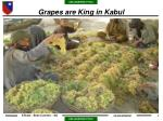 grapes are king in kabul