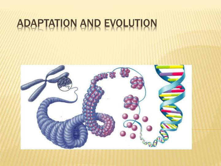 adaptation and evolution n.