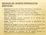 rganos del aparato reproductor masculino