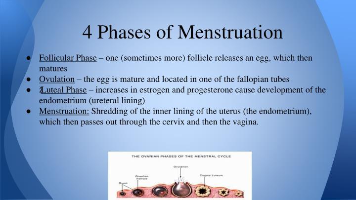 4 Phases of Menstruation