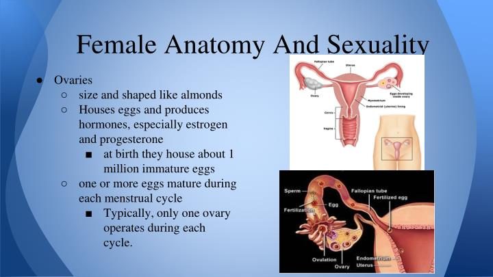 Female Anatomy And Sexuality