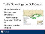 turtle strandings on gulf coast