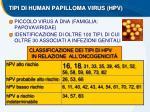 tipi di human papilloma virus hpv
