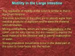 motility in the large intestine