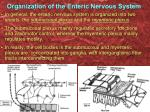 organization of the enteric nervous system