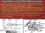 organization of the enteric nervous system1