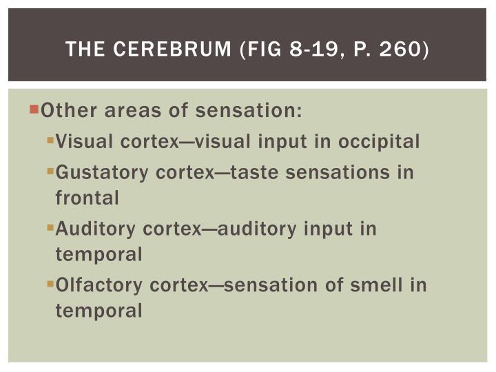 The cerebrum (Fig 8-19, p. 260)