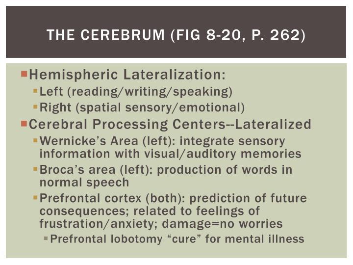The cerebrum (Fig 8-20, P. 262)